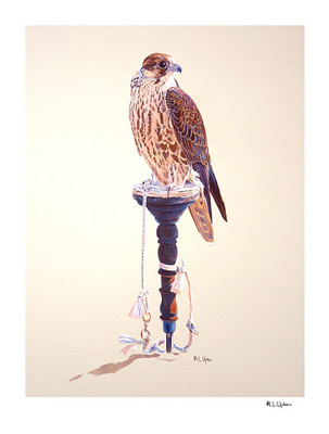 Peregrine on Arab Block Print