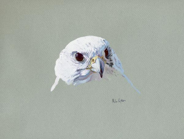 White Gyr Falcon