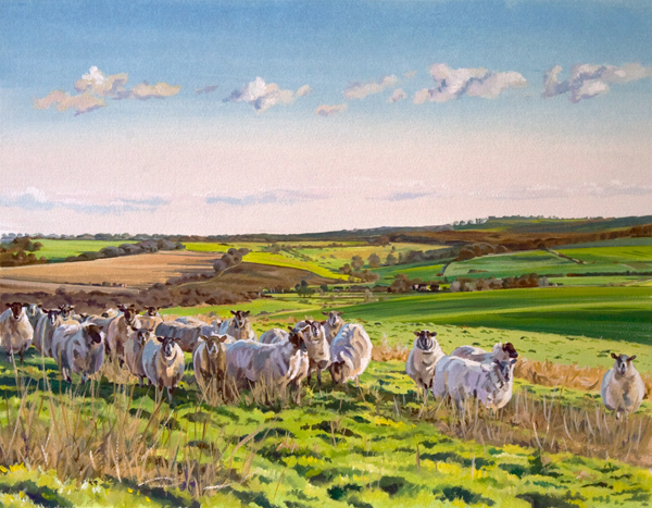 Sheep at Totterdown
