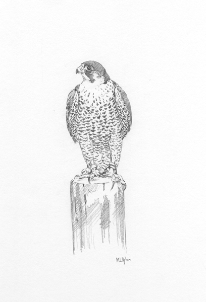 Peregrine Falcon on a Block