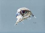 Sliver Gyr Falcon